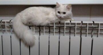 отопление, скрин