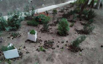 Вырвали с корнями и выбросили в мусор: в Днепре уничтожили вечнозеленые растения, кадры