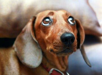 В харьковском супермаркете собаку вместо сумки засунули в камеру хранения: фото беспредела