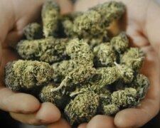 marijuana-buds-600×376