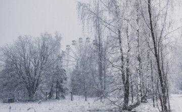 """Редкие животные нашли убежище в Чернобыле, красочные фото: """"Как же они красивы"""""""