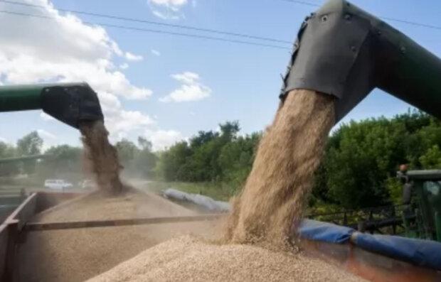 """""""У них кінець епохи бідності"""": в Держрезерві """"зникнення"""" зерна на 800 млн гривень списали на мишей"""