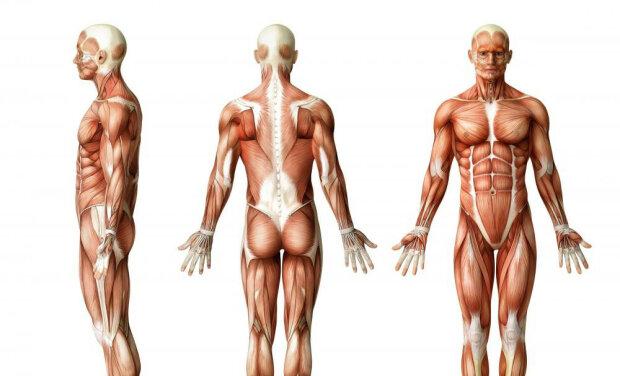 человек тело