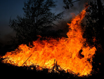 пожар, огонь, пламя, костер, горит лес