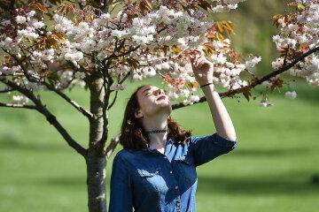 Весна, квіти, сакура