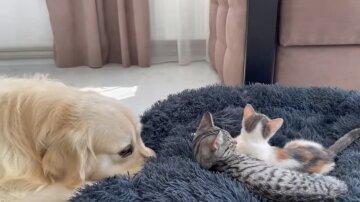Нахабні кошенята прогнали пса з його місця: відео набирає популярність в мережі