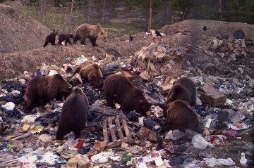 """Через нашестя ведмедів у Якутії ввели """"надзвичайку"""""""