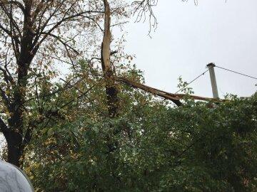 Ураган на Донбассе: опубликовано жуткое видео