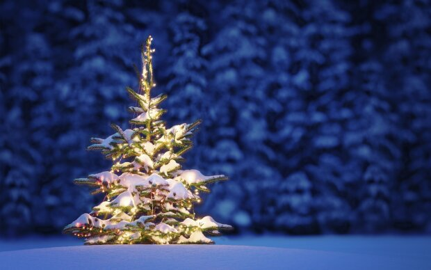 новый год, елка, лес