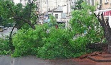 Мощное дерево рухнуло в центре Одессы, пострадали  жильцы: кадры происходящего