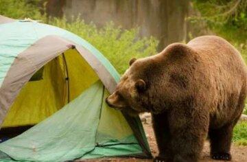 Медведь напал на туристов, погиб ребенок: детали трагедии в России