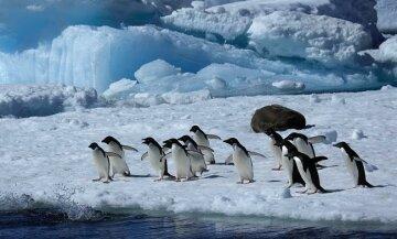 В Антарктиді випала рекордна за сотні років кількість снігу: чим це загрожує