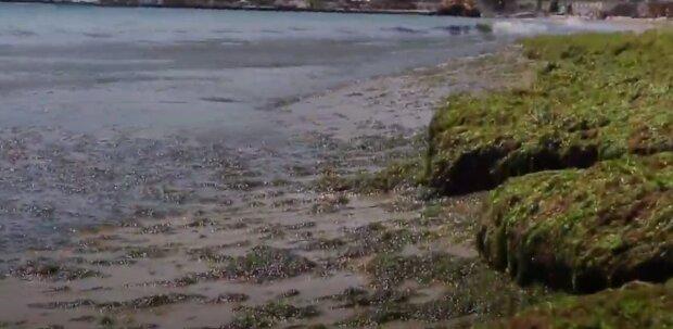 В Одессе море позеленело и превратилось в жижу: видео происходящего