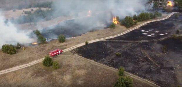 горит лес, пожар, сухостой