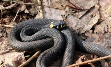Змії активізувалися на Дніпропетровщині: дивіться під ноги, фото
