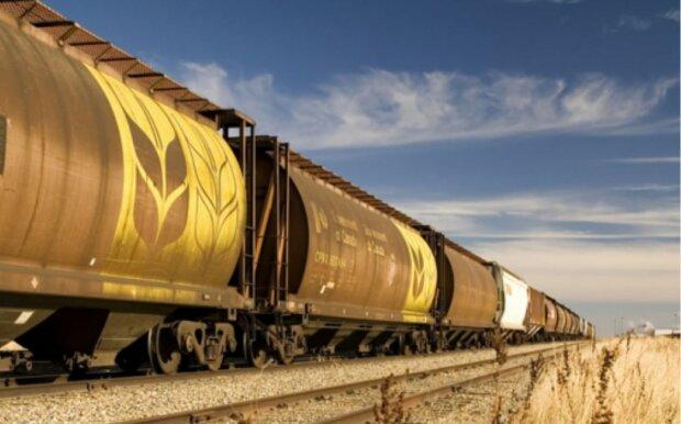 аграрії, зерно у вагонах, вагони