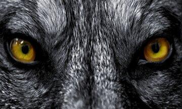 animal-eyes-8286