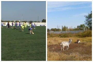 """""""Замість спортсменів бігають кози"""": на що перетворили новий стадіон, кадри"""