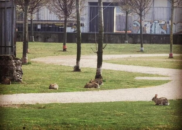 парк, животные