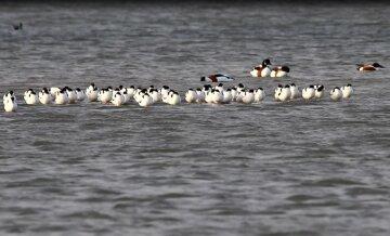 Весна заманила  редчайших птиц в Одесскую область: фото красоты облетели сеть