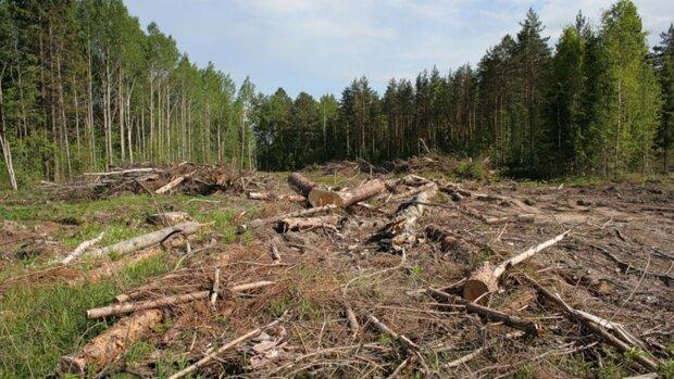 """""""Комахи та негода"""": на Львівщині розповіли, куди поділися ліси"""