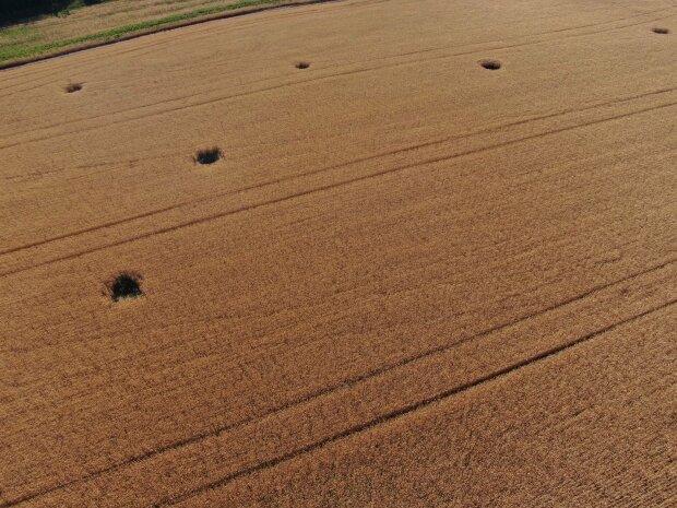 Снаряди бойовиків розбомбили поля на Луганщині, кадри: є загроза масштабного спалаху