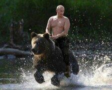 путин медведь