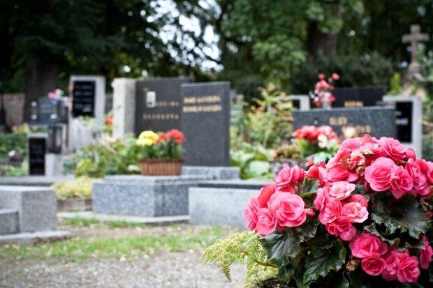 цветы, кладбище,
