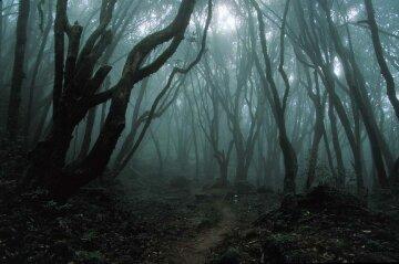 лес, деревья