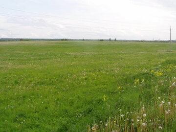поле, трава, степь