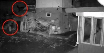 """На украинцев начали нападать опасные хищники, есть жертвы: """"следите за детьми"""""""