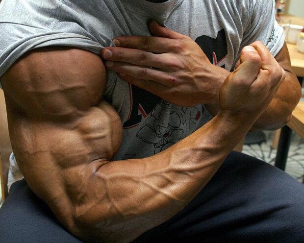 бицепс, мышцы