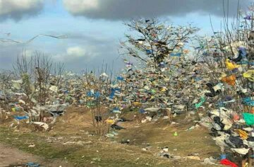 Мільйони пакетів зависли на деревах поблизу Одеси: лякаюче відео