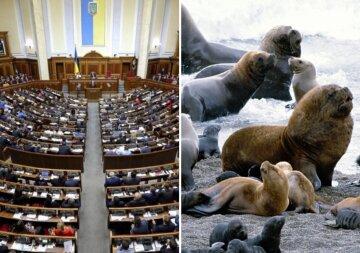 В Раде внезапно захотели помочь тюленям и акулам: детали нового законопроекта