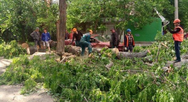 Стихия пронеслась по Одессе: деревья падали прямо на машины, кадры ЧП