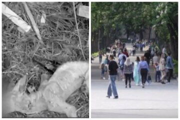 """""""Чупакабра"""" потрапила в пастку в українському селі: як виглядає звір"""