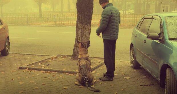 В Днепре массово травят собак, среди жертв много домашних: хозяева в отчаянии, все детали