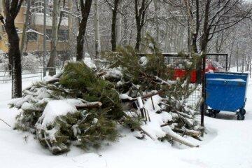 куда сдать елки
