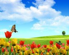 лето, весна, цветы
