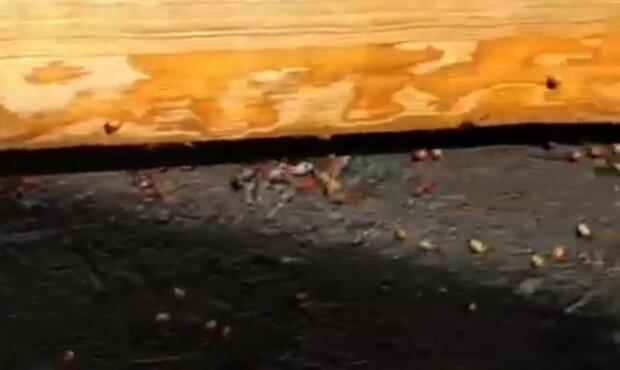 """""""Готуються захопити світ"""": Харків окупували полчища небезпечних комах, відео"""
