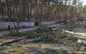 Деревья массово уничтожают под Киевом, полицию подняли по тревоге: кадры варварства