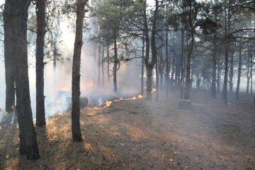 Вчені б'ють на сполох: дерева можуть зникнути з лиця землі, подробиці катастрофи