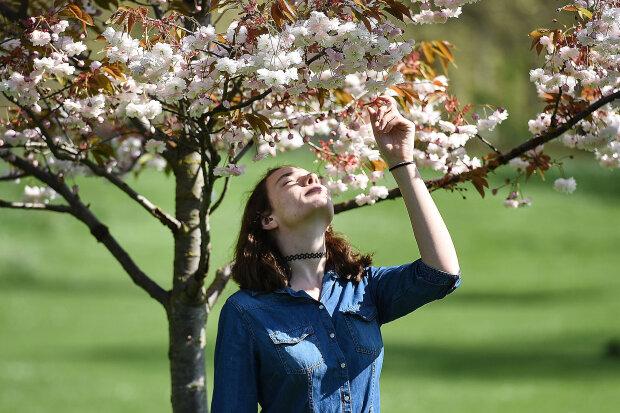 Весна, цветы, сакура