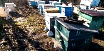 «Вот это начало 2021 года»: видео аномалии в Одесской области, проснулись даже пчелы