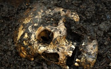 череп, скелет, кости