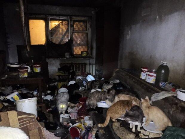 животные, квартира, антисанитария
