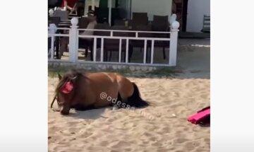 """""""Не люди, а изверги"""": на пляже в Одессе бросили уставшего пони на жаре, видео"""