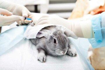 косметика, ученые, тестирование на животных