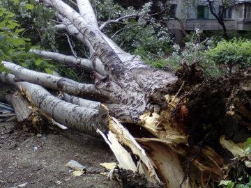 дерево, шквал