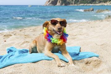Перший пляж для собак відкрили в Іспанії